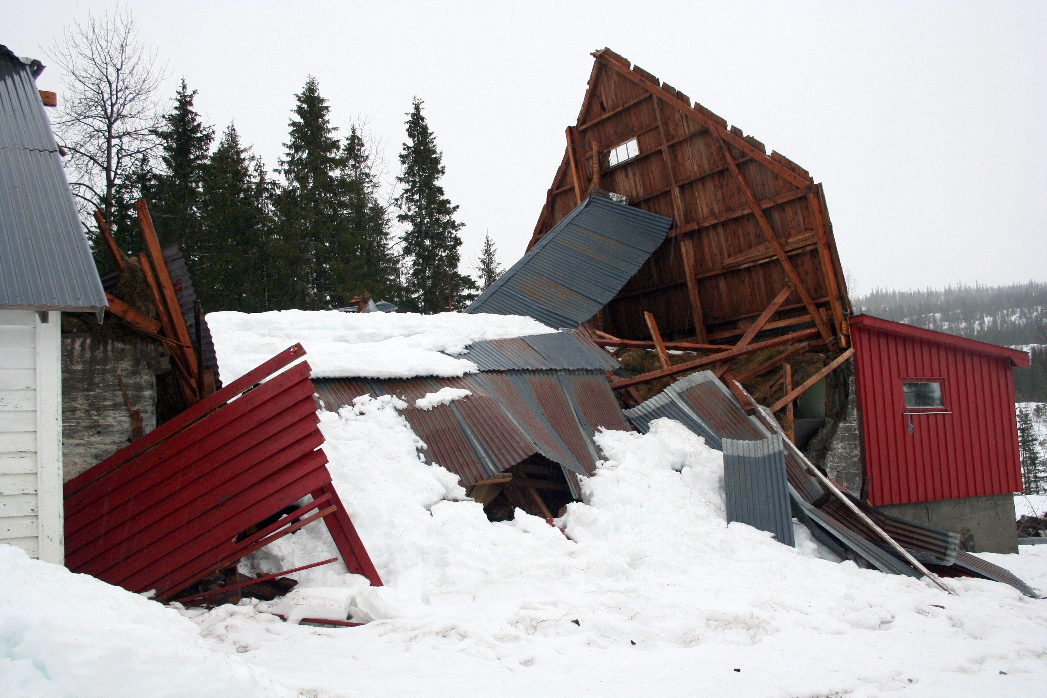 Eldre driftsbygning som har kollapset på grunn av store snømengder og fordi taket ble måkt på den ene sida slik at det oppsto skjevbelastninger i tillegg til stor vekt. Foto: Nils Inge Lorentsen