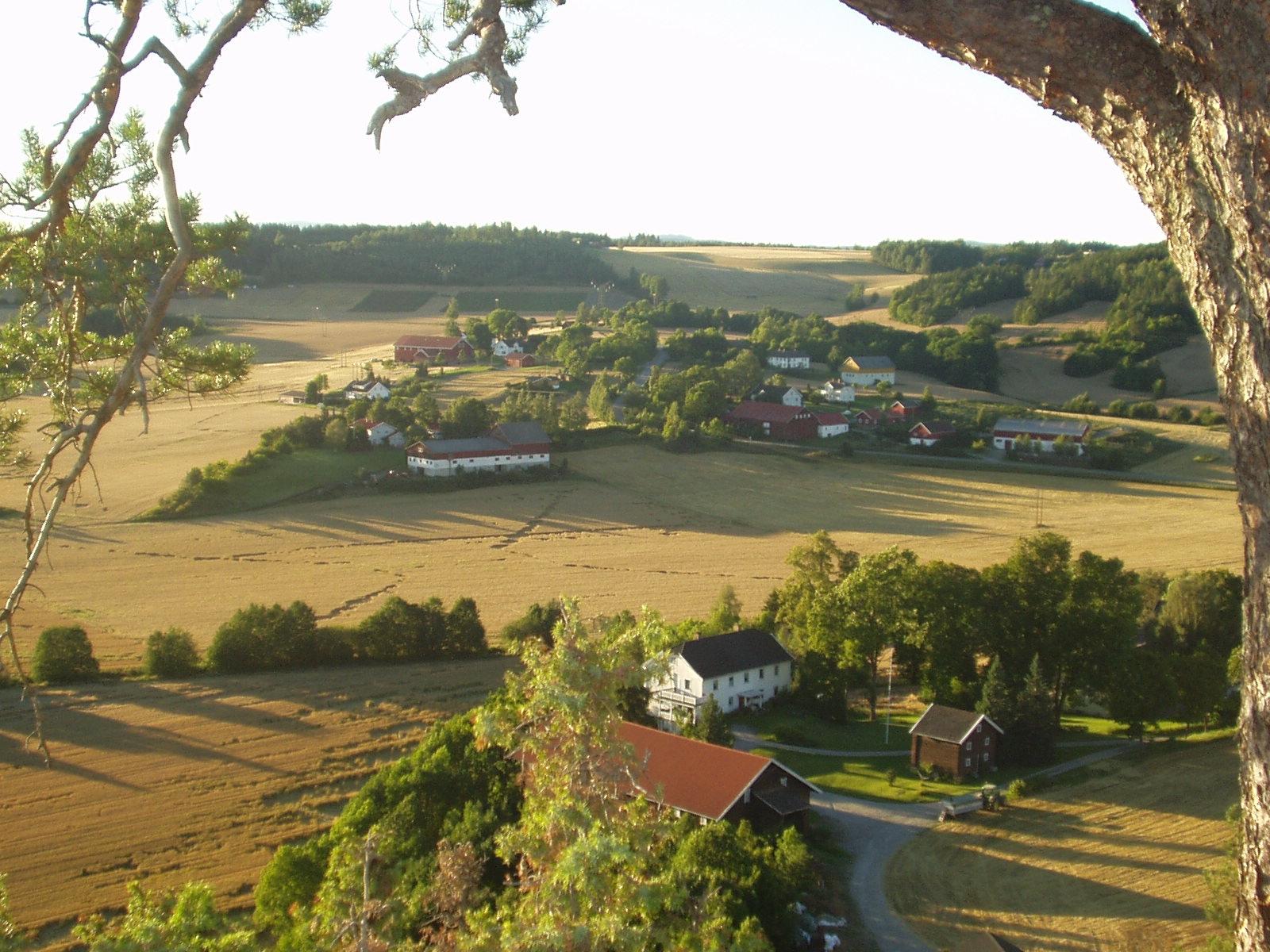 Steinsletta i Ringerike og Hole kommuner er et av de to utvalgte områdene i Buskerud fylke. Foto: Jørn Jensen Buskerud fylkekommune