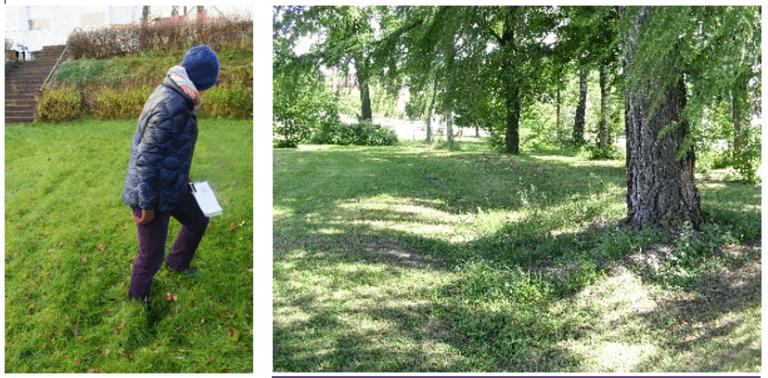 Til venstre: Ved registrering av en hage i Åsgårdstrand ble det påvist et søkk i plenen som viste seg å være spor etter ett av tre trær i en tidligere trerekke. Foto: May Britt Håbjørg, Riksantikvaren. Til høyre: I Hamar bispegårdshage skimtes konturene av en gjengrodd gangvei. Hagen er svært forenklet, og de ytre grusgangene har fått gro igjen med gras. Foto: Mette Eggen, Riksantikvaren.