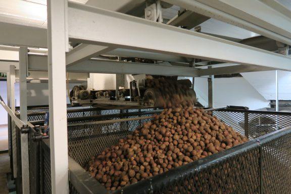 Bilde av poteter som er det viktigste råstoffet for akevitten som produseres på Atlungstad. Foto er tatt av Anke Loska, Riksantikvaren