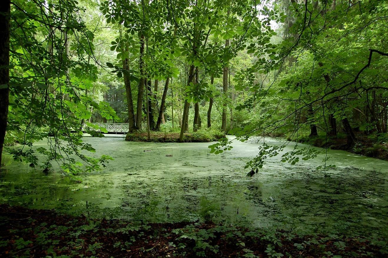 Bilde fra parken tilhørende Grønli gård, denne er også fredet. Foto: Jan Høvo
