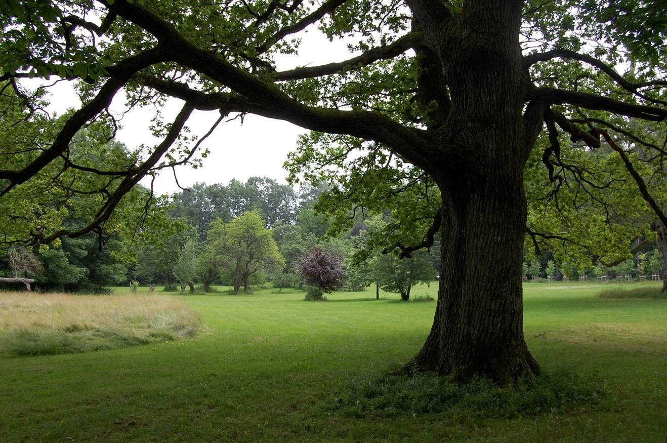 Bilde fra parken. Mange av de gamle trærne er bevart i parken på Grønli gård. Foto: Jan Høvo