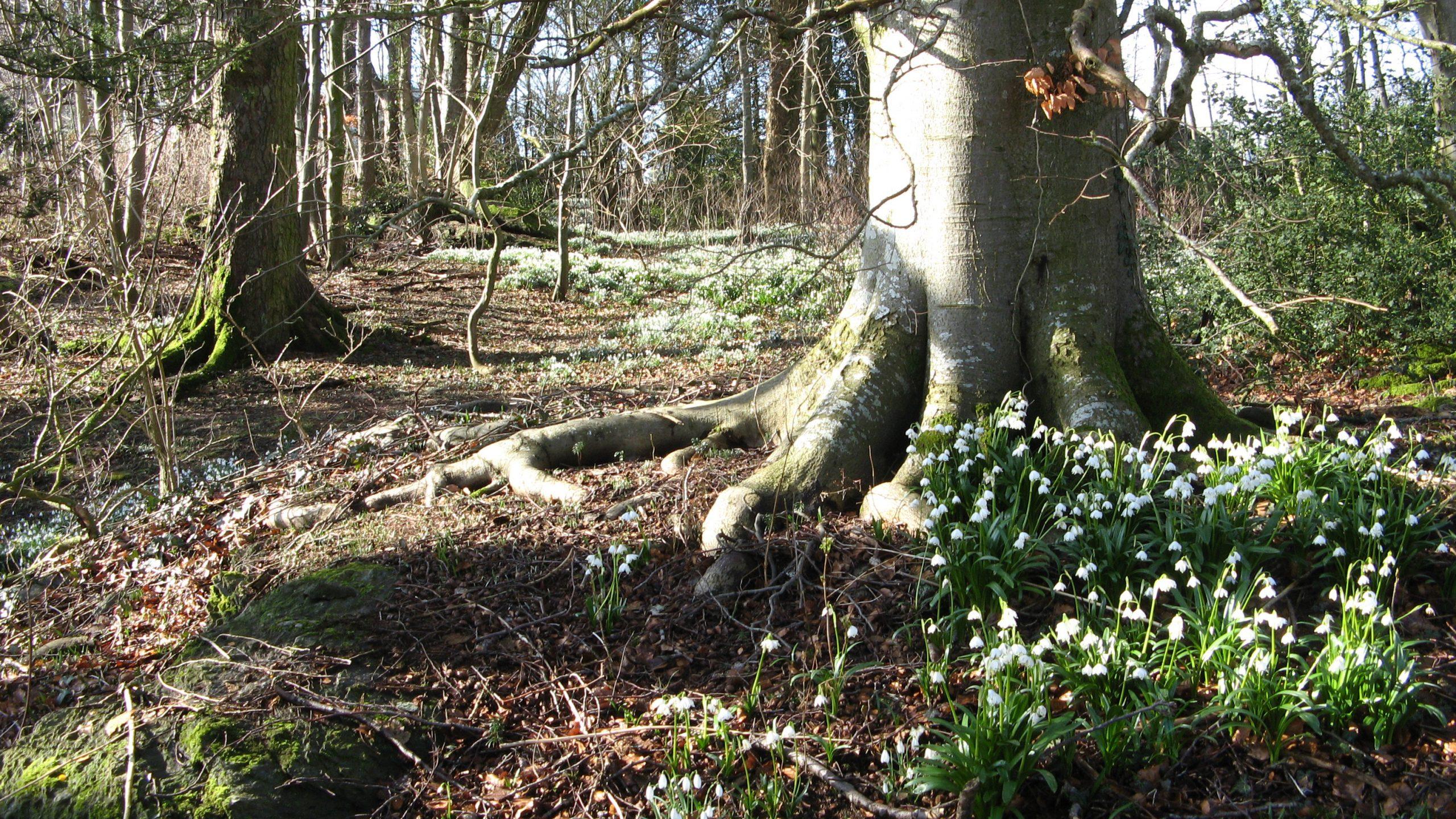 Bilde av området rundt Hindal Gård. I dag er trærne store og mektige med undervegetasjon av martagonliljer, snøklokker, klosterklokker og ramsløk. Foto er tatt av Mette Eggen, Riksantikvaren