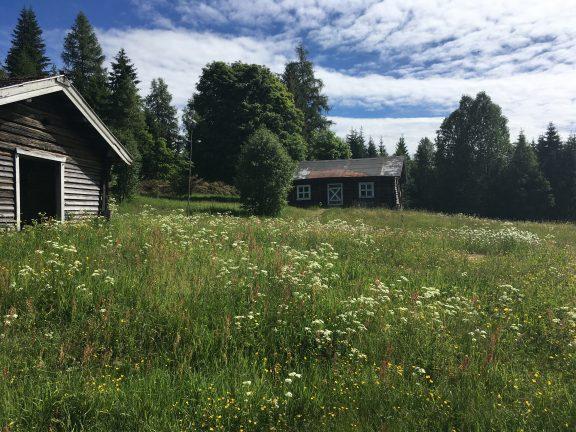Bilde av tunet som tilhører Orala. Det er god plass mellom husene på tunet på Orala. Gammelfjøset kan sees i bakgrunnen. Plassen ligger langs Finnskogrunden.. Foto er tatt av Marit Vestvik, Riksantikvaren