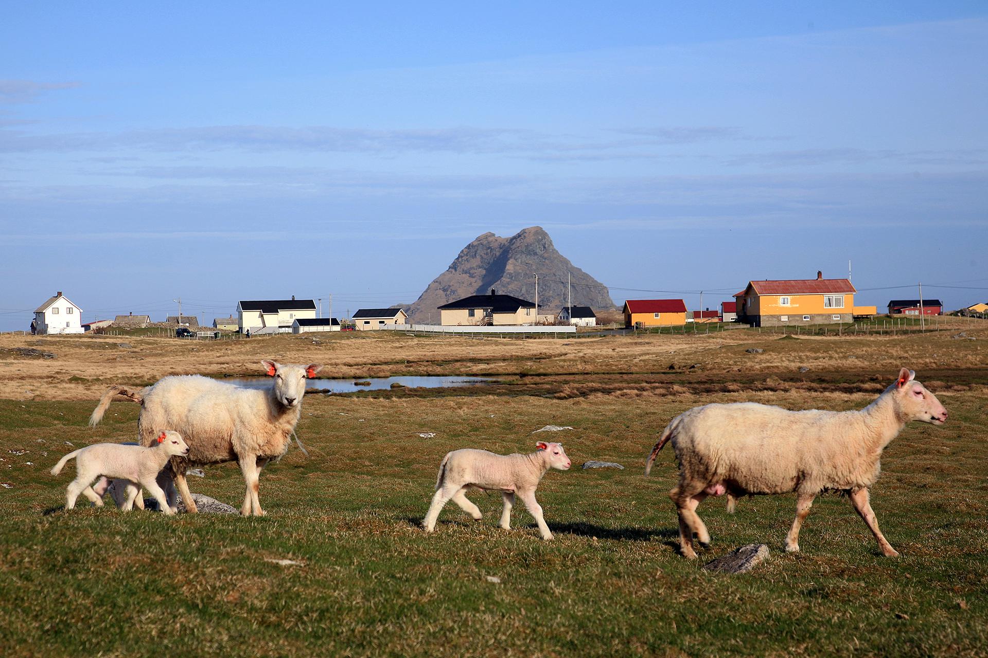Bilde fra et av de utvalgte kulturlandskapene, Røst. Foto: Oskar Puschmann