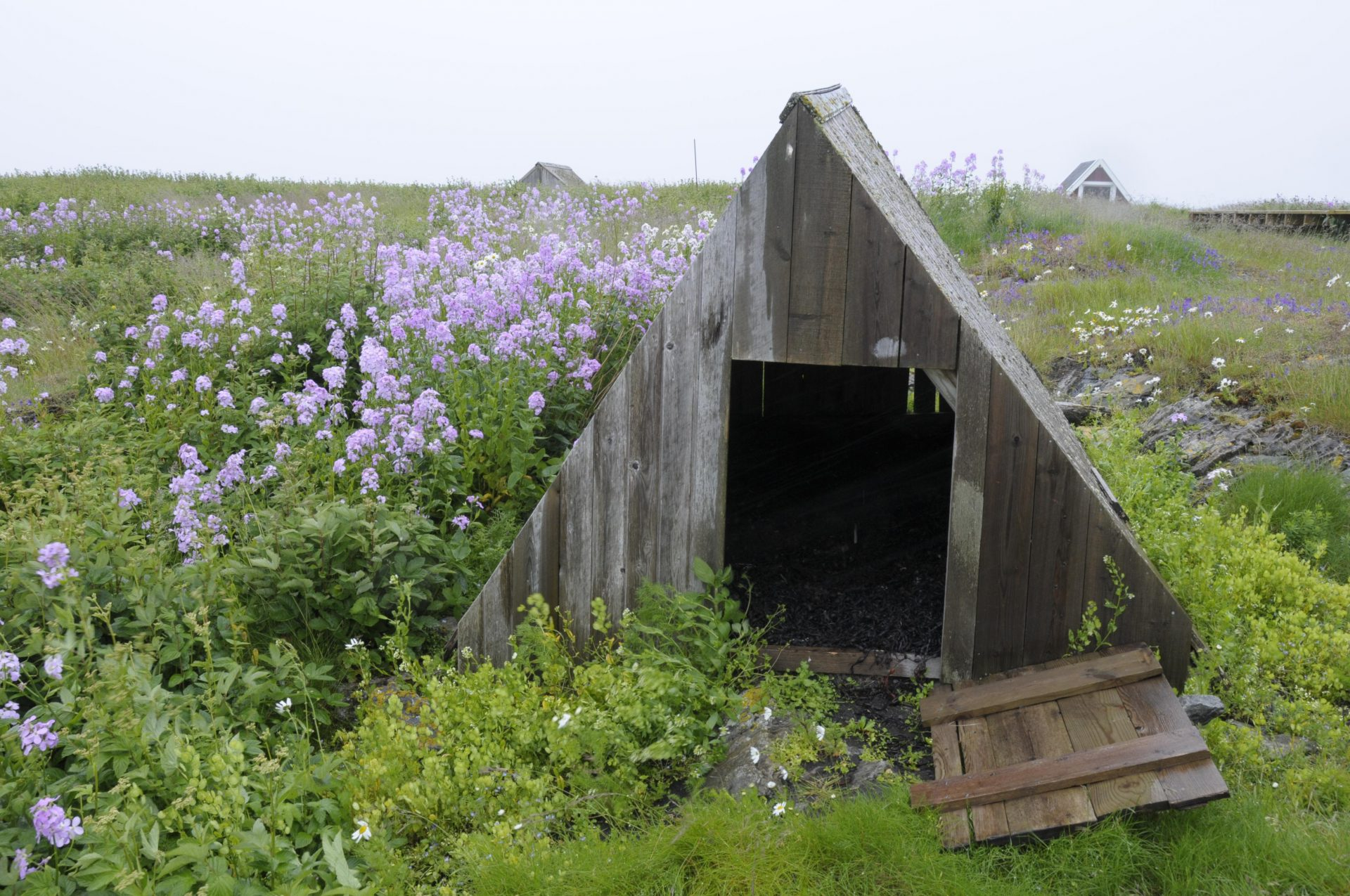 Picture of a Eider duck house on Vega. The eider duck houses are cleaned, and the seaweed replaced every year. A value creation project entitled 'The valuable coastal culture in Nordland' (Den verdifulle kystkulturen i Nordland) has helped carry the knowledge of eider husbandry forward, and to ensure that eiderdown products can still be found on the market. Photo by Marit Bendz, the Directorate for Cultural Heritage