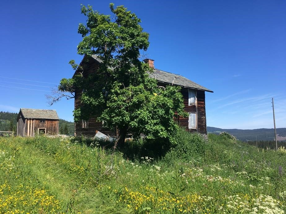 Et sommerbilde av et eldre tømmerhus. Rundt huset er en grønn eng med blomster og rett foran huset står et tre.