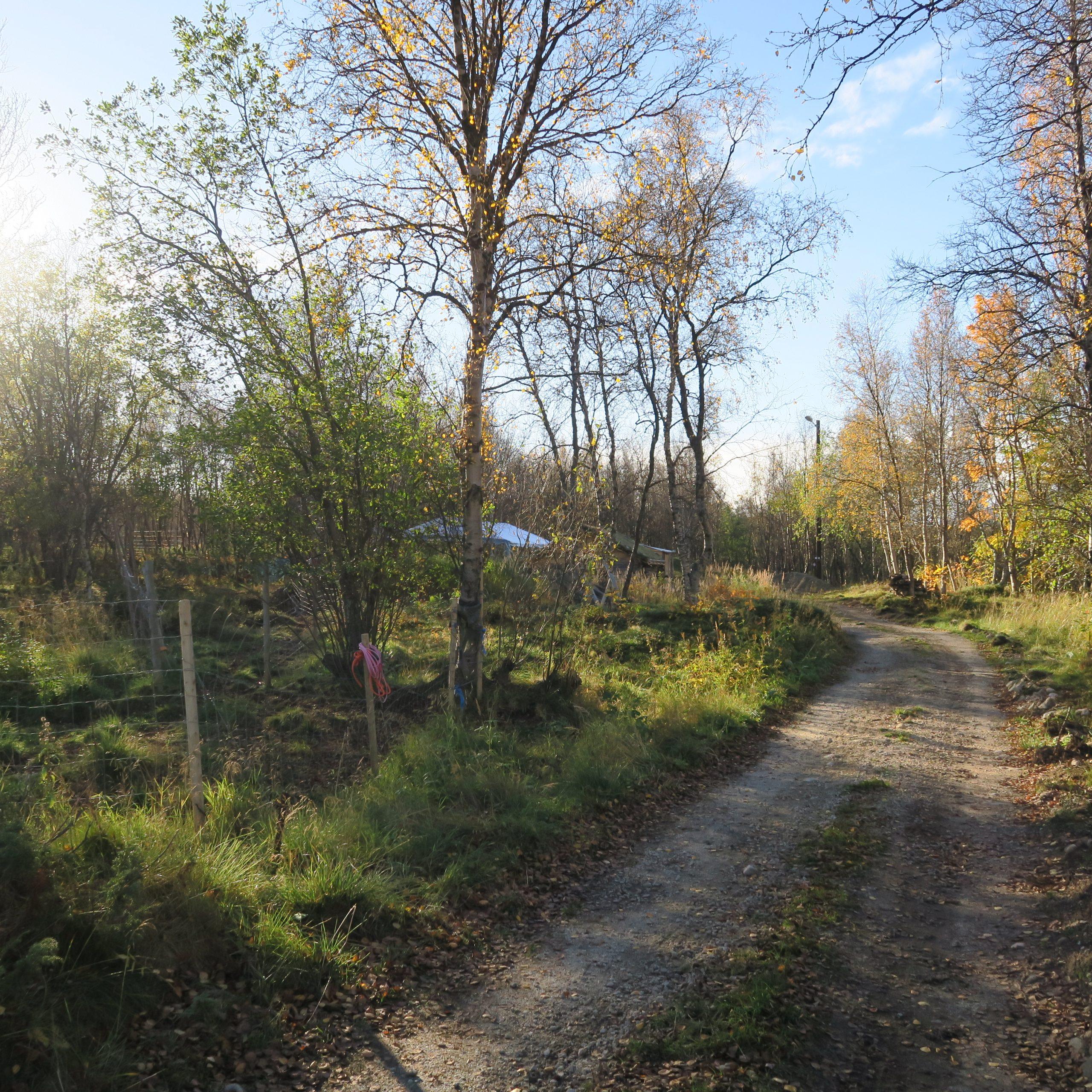En grusvei som går gjennom skogen. Noe høstfarger på trærne.